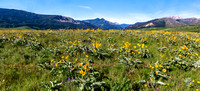 Montana Wildflower Field 1