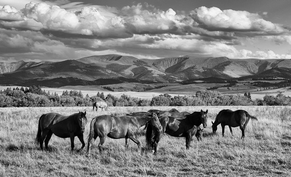 Montana - Horses and Hills